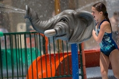 FtWorthZoo_SpinNSpray_Elephant